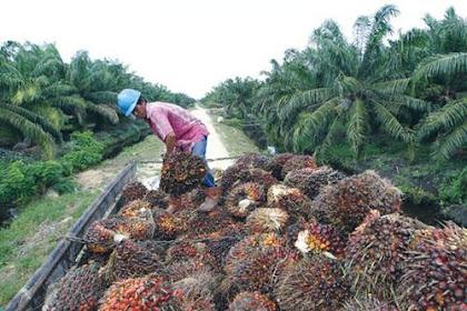 Lowongan Perusahaan Perkebunan Kelapa Sawit Indragiri Hilir Oktober 2018