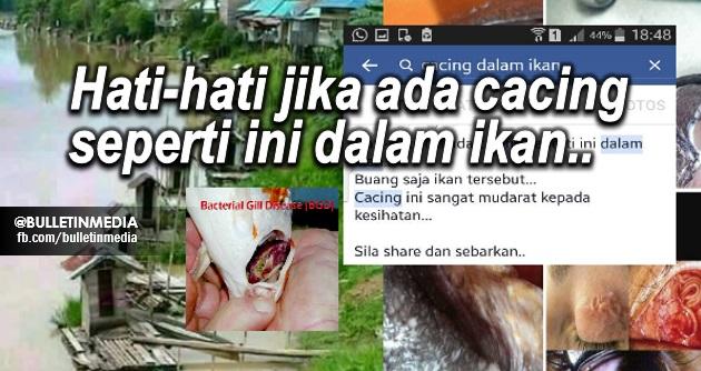 Mohon Bantu Sebarkan!!! Lepas Tengok Gambar Ini, Korang Masih Nak Makan Ikan Tak?
