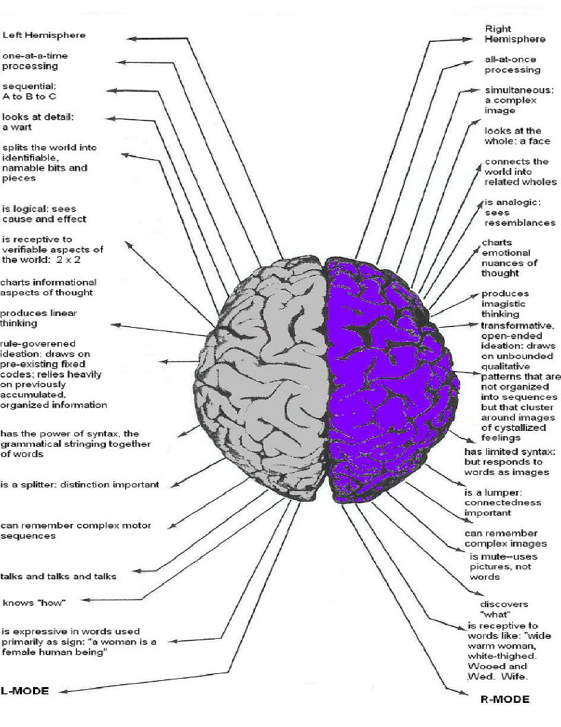 ucmassatwa: Brain (Left vs Right )