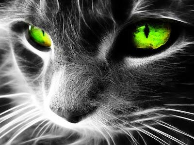 rostro-de-un-gato