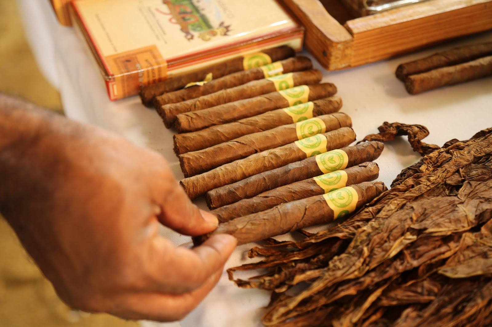 Más riquezas y empleo en Espaillat: tabacaleros reciben apoyo para agregar valor a sus productos