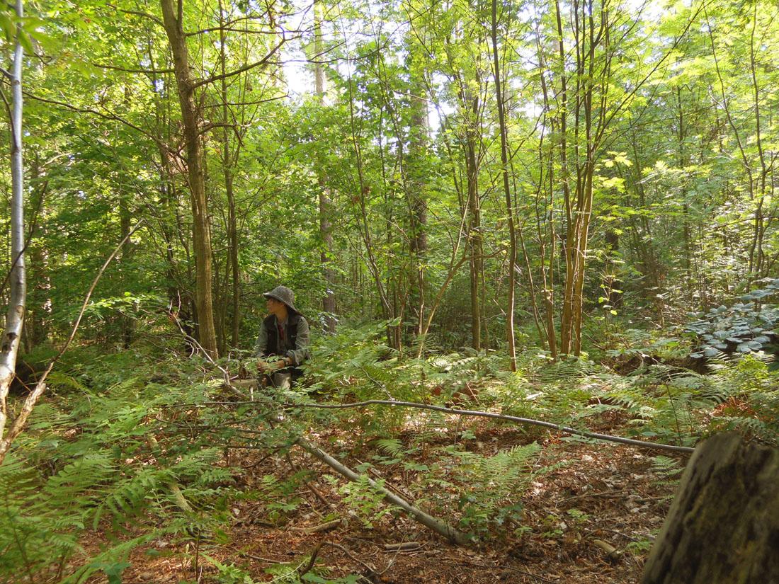 Bosco di pino silvestre, 7 agosto 2015