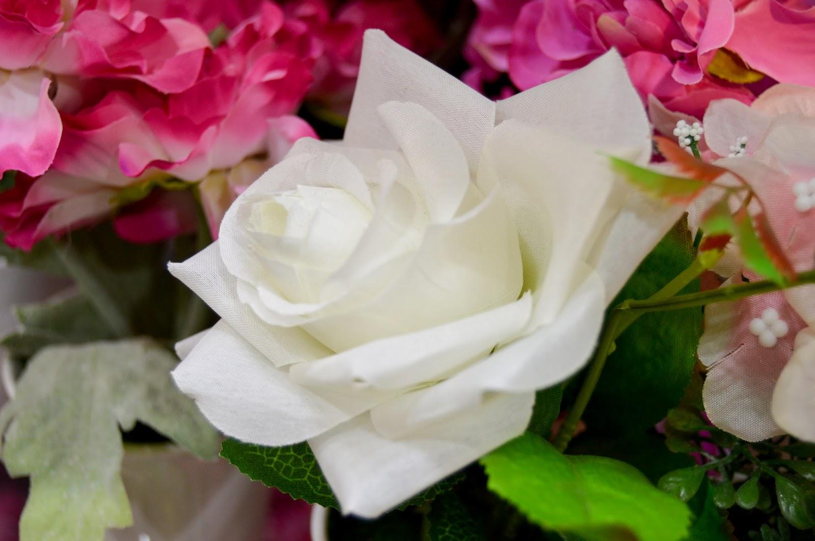 Free White Flower stock photos & wallpapers