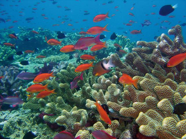 Resultado de imagem para biodiversidade marinha