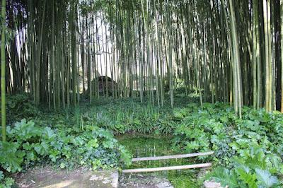 Il boschetto di bambù