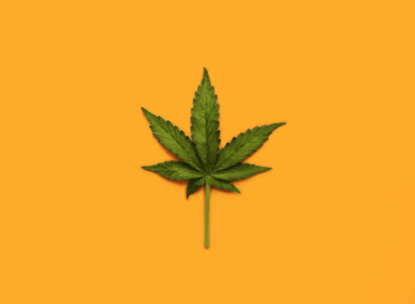 Hogar Crea se opone a la legalización de la marihuana