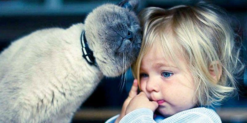 Γάτα και μικρά παιδιά