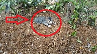 Mengapa Kucing Ini Diam Setiap Hari Di Kuburan? Ternyata...