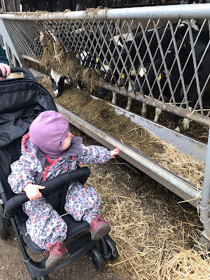 My daughter looking at the calves.