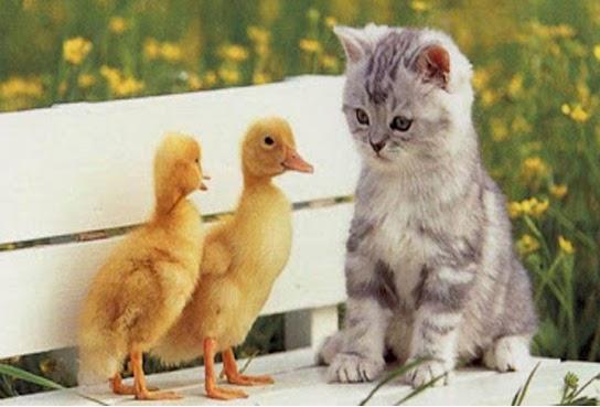kucing dengan burung kecil