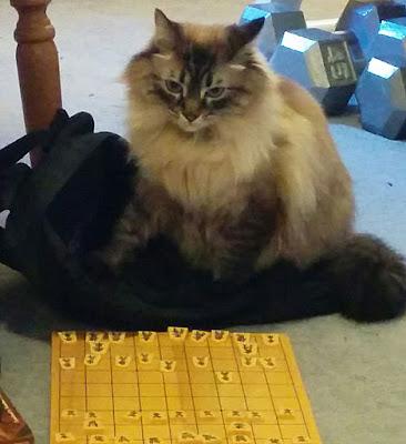 Shogi Cat