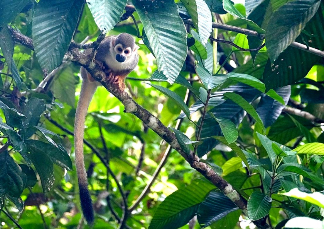 Rain Forest Monkey | Wallpapers Zones