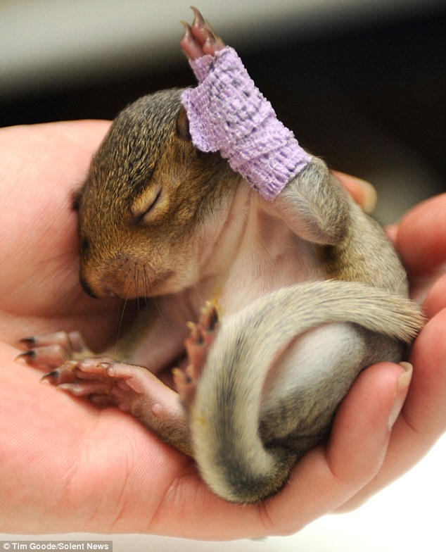 The animal zone: Hands up if you're cute! Baby squirrel ...