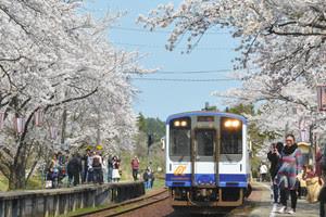 能登鹿島駅桜満開