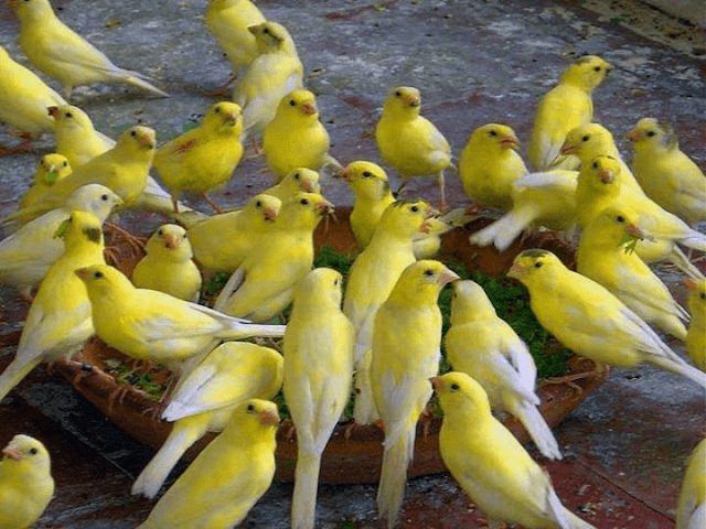 Android Mobile I Phone Birds HD Wallpapers