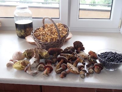 grzyby 2018, grzyby w czerwcu, grzyby na Orawie, pieprzniki, borowiki, muchomory, śluzowce, borówki, czarne jagody
