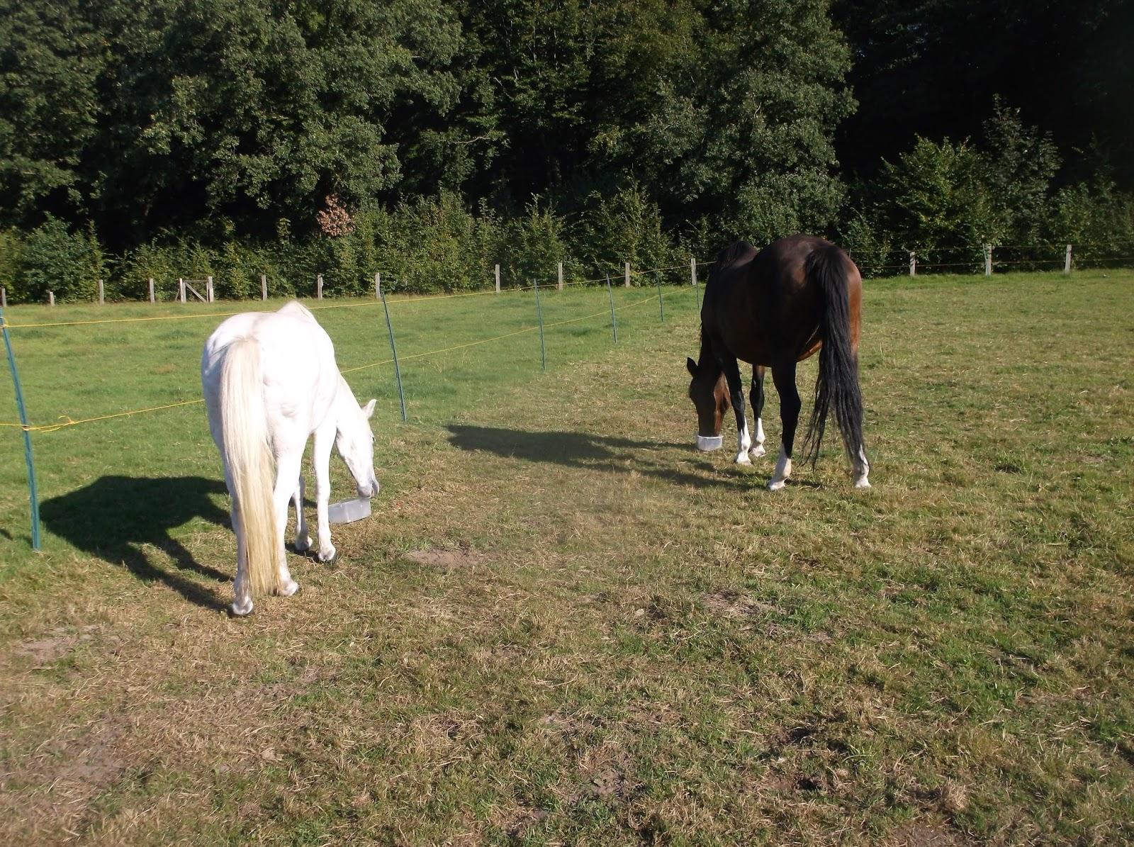 pferde tiere gesundheit soziales zeitgeist pferdemist f r den blumengarten. Black Bedroom Furniture Sets. Home Design Ideas