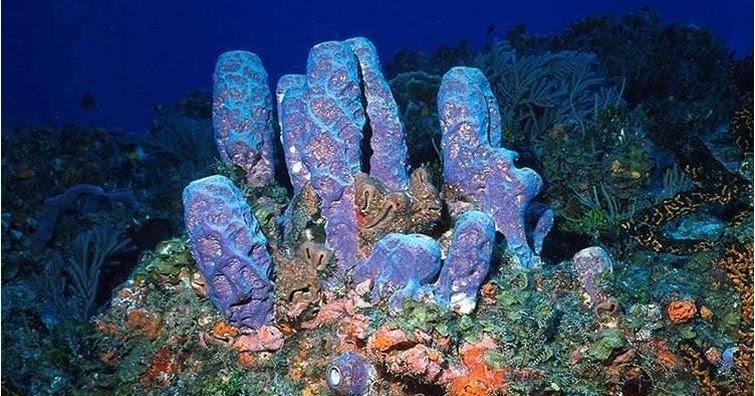 Multiple Choice Questions On Phylum Porifera Sponges