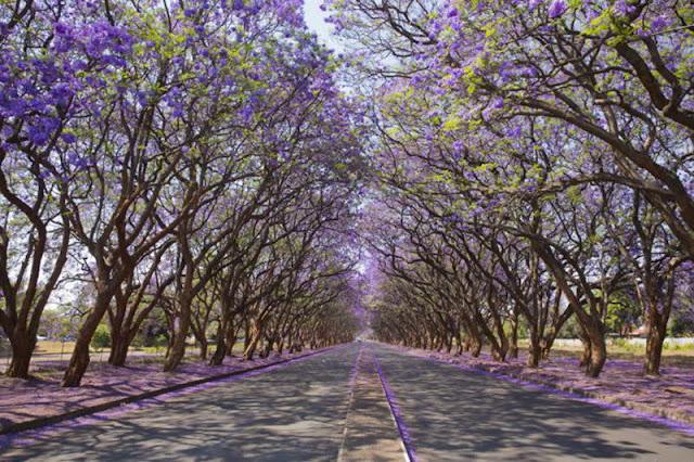 ميلتون أفينيو ,هراري ,زمبابوي Milton Avenue, Harare, Zimbabwe