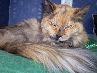 Ginger, our favorite tortoiseshell cat