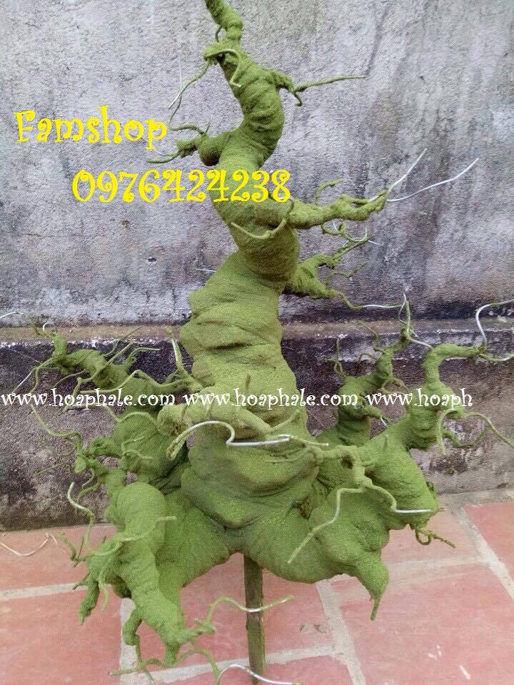Goc bonsai mai dao tai Tran Quy Kien