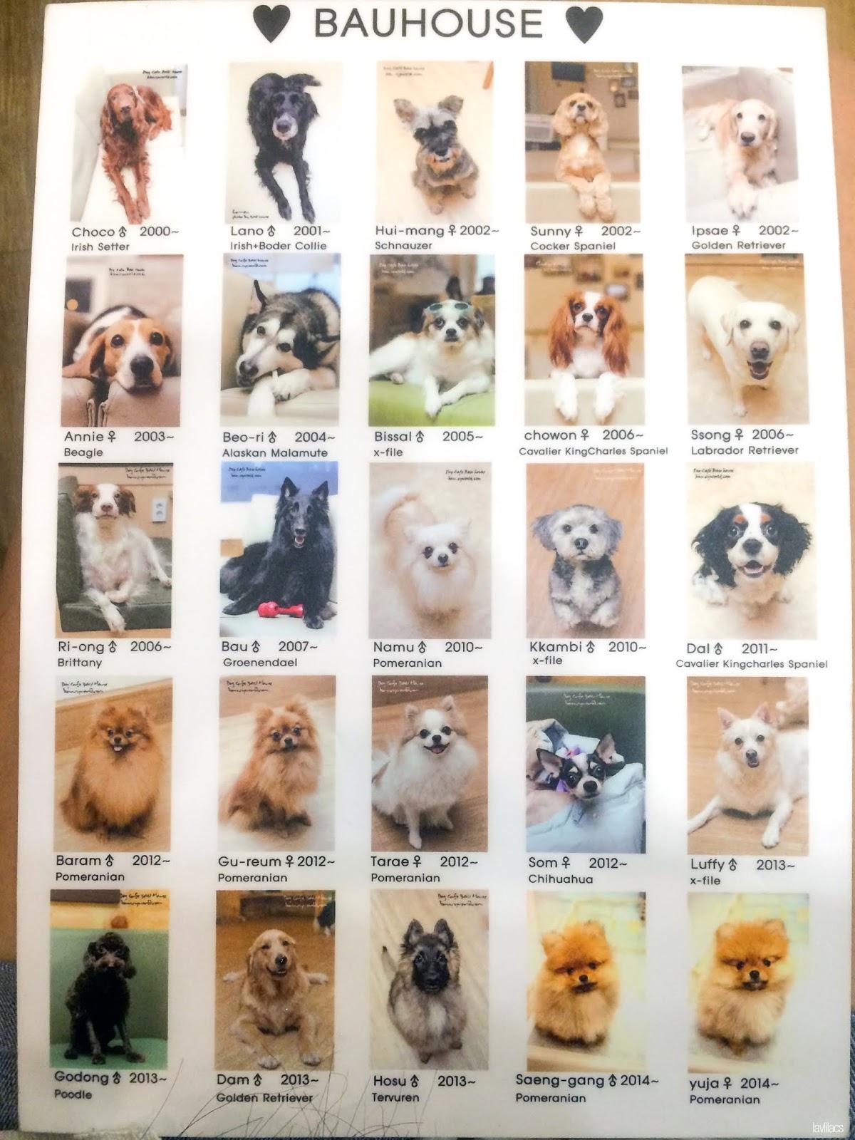 Seoul, Korea - Summer Study Abroad 2014 - Bauhaus Dog Cafe resident dogs