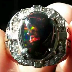 cara merawat black opal jarong