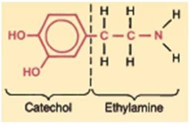 Struktur Dasar Katekolamin.