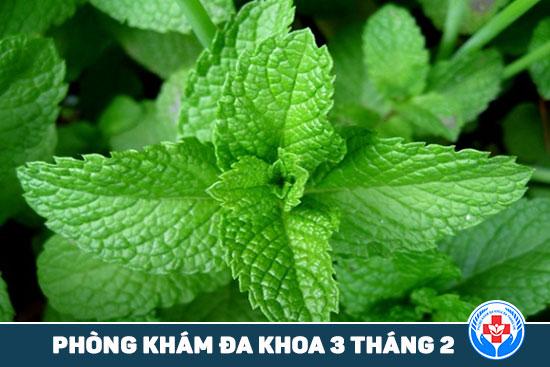 HCM - 5 loại thảo dược mà bạn có thể trồng tại ban công 5-loai-thuoc-thao-duoc-ma-ban-co-the-trong-tai-ban-cong-2