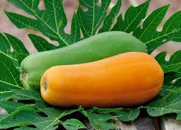 The Amazing Of Health Benefits of Papaya for health - Healthy T1ps