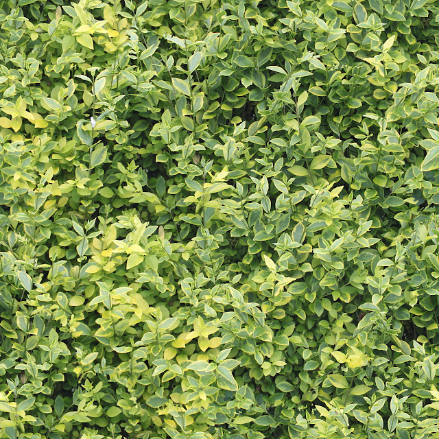 Seamless hedge green yellow leaves tree texture