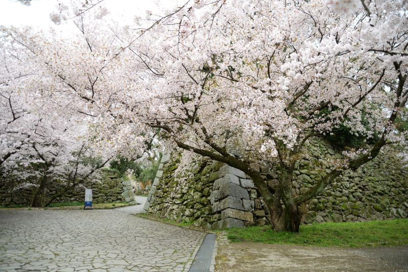 Endless Traveling Map: Fukuoka Castle Sakura Festival 2016 ...
