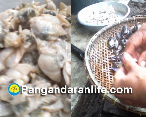 Proses pemisahan kerang dengan cangkangnya