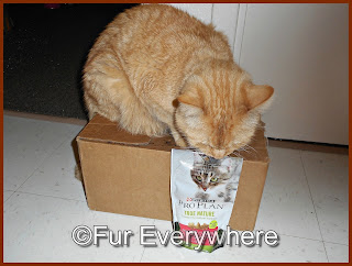 Carmine is checking out a bag of Pro Plan True Nature Protein Crunch with Real Lamb Cat Treats.