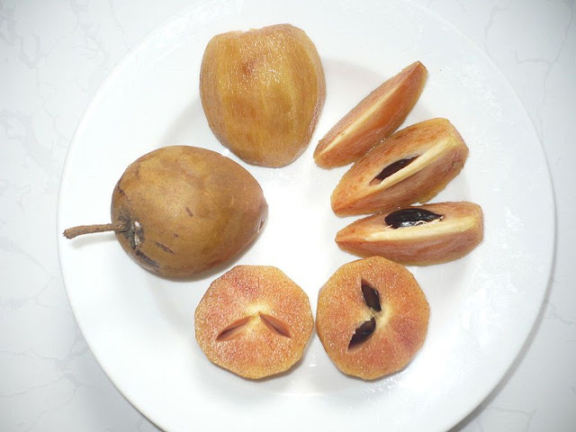 Quả HỒNG XIÊM - Achras sapota - Nguyên liệu làm thuốc Chữa Ho Hen