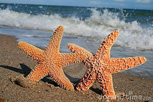 Starfish Facts for Kids - What is a Starfish? - Ency123