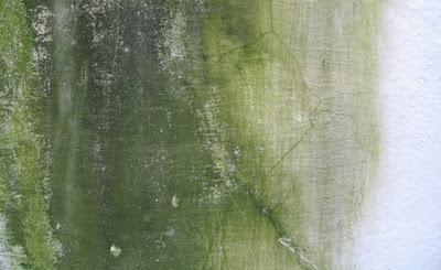 Jamur pada tembok seringkali menciptakan tembok menjadi kotor Cara Menghilangkan Jamur & Lumut Di Permukaan Tembok
