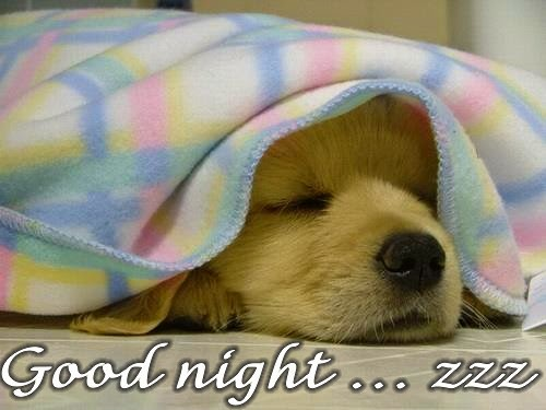 Gud Nite Wallpaper With Quotes Cute Dog Wishes Good Night Wallpaper With Message