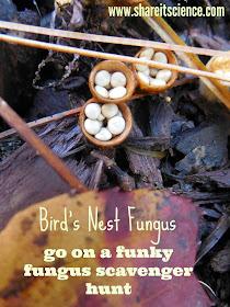 http://www.shareitscience.com/2016/10/beautiful-birds-nest-fungus-scavenger-hunt.html