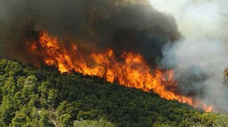 Γιαννιτσοχώρι: Πυρκαγιά έκαψε 4 στρέμματα δασικής έκτασης