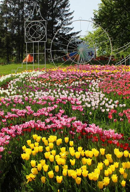 Фрагмент композиции из тюльпанов