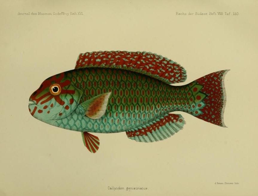 #Peixe