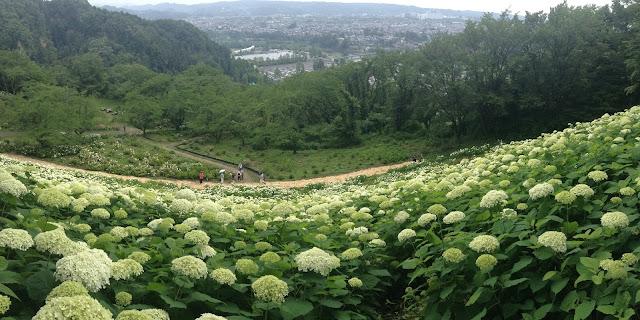Tokyo Summer Land あじさい園