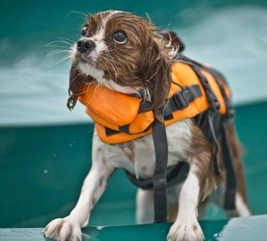 Dog Pool Day Kansas City