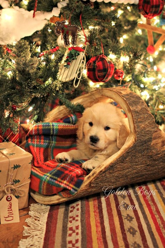 A Very Special Christmas Present