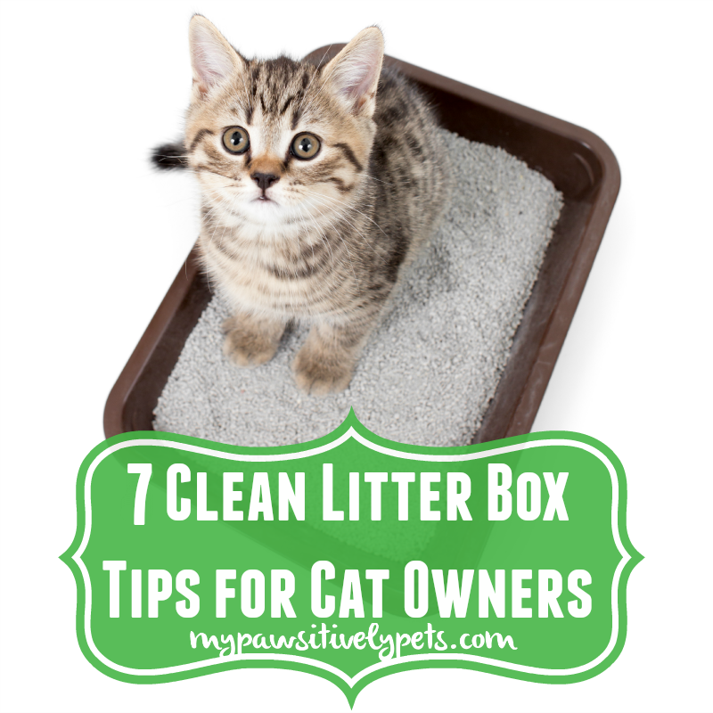 7 clean litter box tips for cat owners pawsitively pets. Black Bedroom Furniture Sets. Home Design Ideas