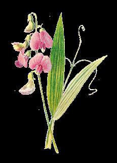 flower illustration digital wildflower image