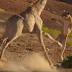 Όλη η «μαγεία» της Άγριας Ζωής σε 30 δευτερόλεπτα (video)