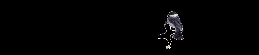 pequenina miosótis