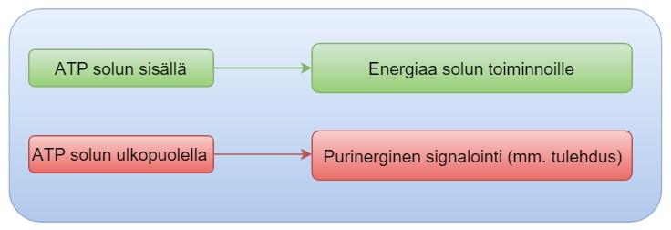 Neutrofiilien Lasku